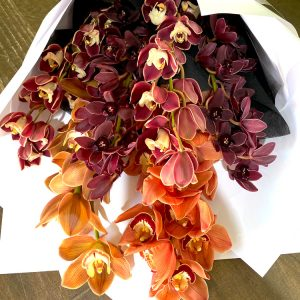Cymbidium Wrap